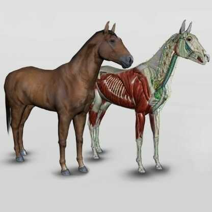 3d-ló anatómia-szoftver